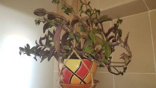Planta con el tiesto cerámica