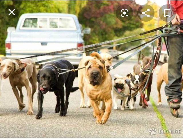 Hola busco trabajo paseando a perros.