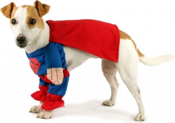 Disfraz perro Superman para raza pequeña