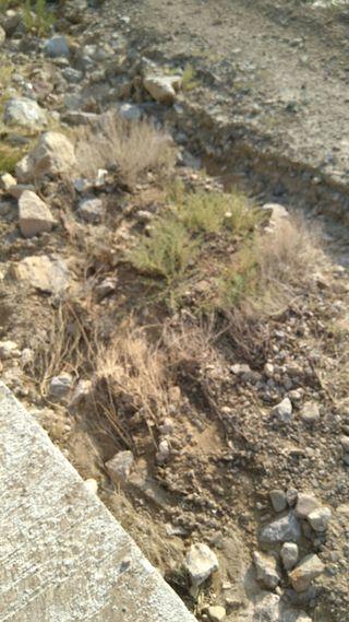 alquilo terreno en Alcoraya llano