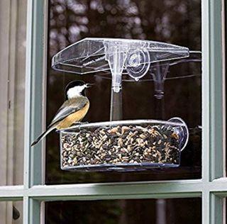 Comedero transparente de pájaros para ventana