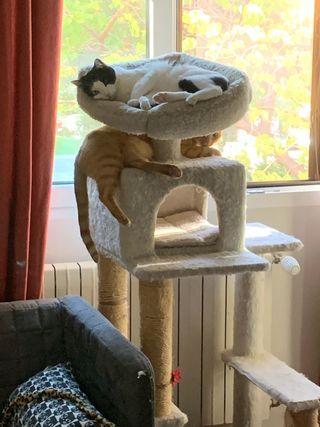Cuidador de gatos a domicilio Aravaca-Pozuelo