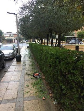 mantenimiento de jardinería