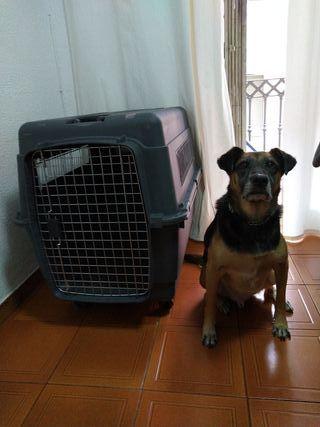 Transportin de Perro Grande-Kennel Serie #500