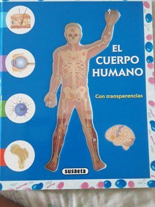el cuerpo humano con transparencias
