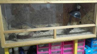 terrario de madera de reptiles.