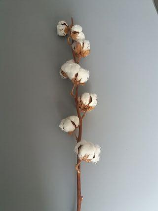 Flor algodón alta calidad.