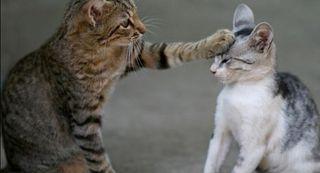 cuidadora de gatos