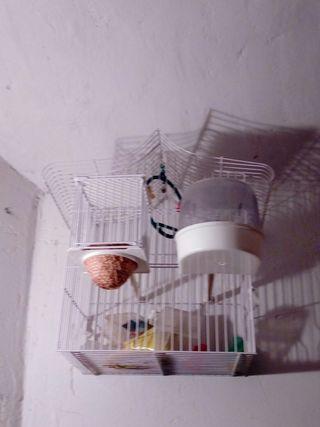 jaula pájaros mediana