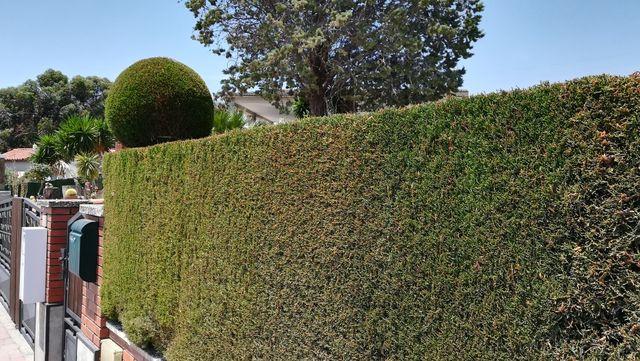 se ofrece jardinero