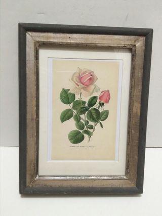 Cuadro Marco antiguo rosa