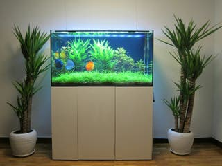 acuario (urna + mueble)