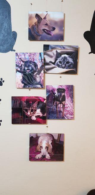 Fotografias de animales.