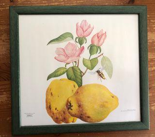Cinco cuadros fruta cocina