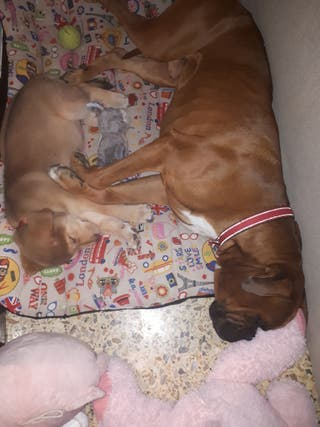 Niñera/Paseadora de perros.