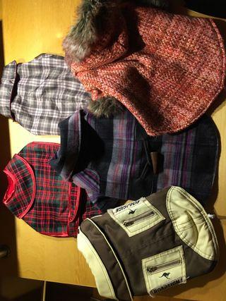 Ropa invierno perro.5 abrigos lote