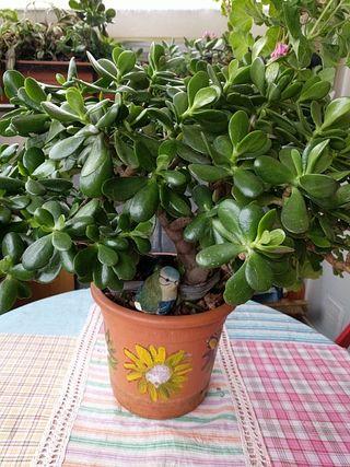 plantas oportunidad