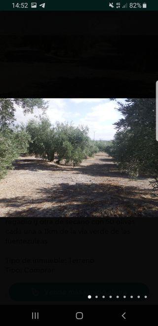 Venta de olivas jaen