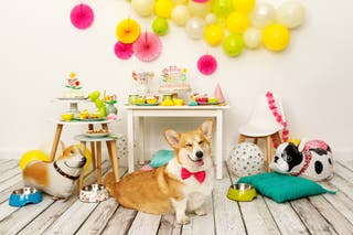 Fiesta de cumpleaños para mascotas