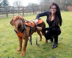 Arnes perro artrosis o trecking