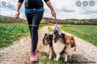 Paseador y cuidador de perros
