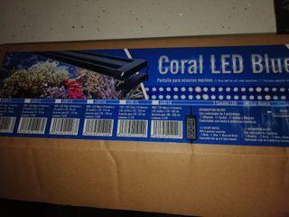 pantalla luz Led coral marino