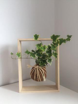 Planta sin maceta