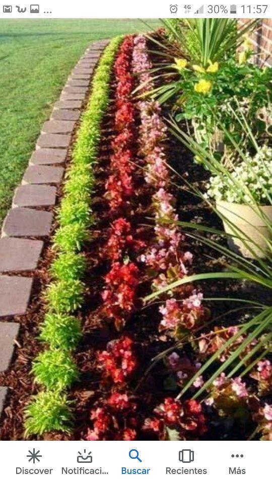 mantenimientos de jardines limpiamos y plantamos.