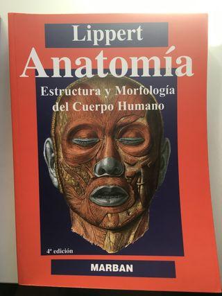 Lippert Anatomia