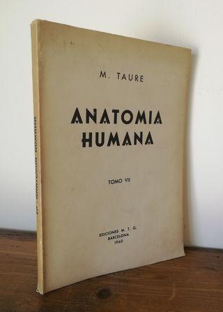 Anatomía humana Tomo VII. Vísceras - M. Taure