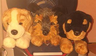 perritos de colección