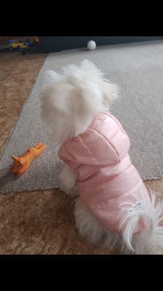 Chaqueta, chaleco, ropa perro