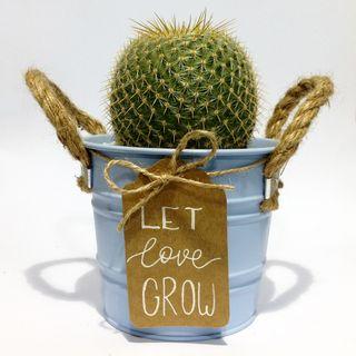 Arreglo con plantas suculentas y cactus en lata
