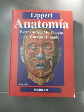 Anatomía Lippert nuevo.