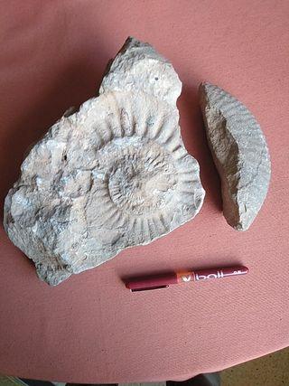 fósiles dos