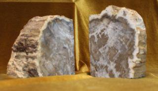 Pareja de xilópalos,Madera fósil.