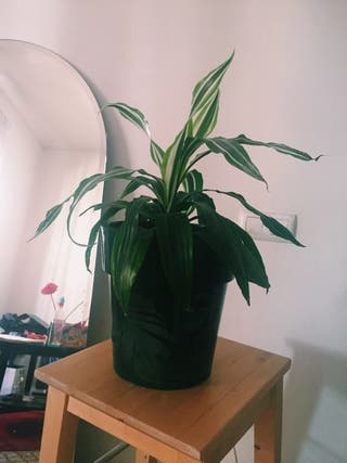 Linda planta