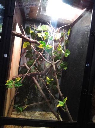 terrario malla para camaleon
