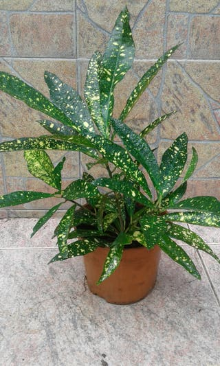 planta interior