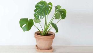 Planta tropical (Más plantas en mi perfil
