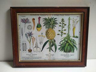 Cuadro piña botanic