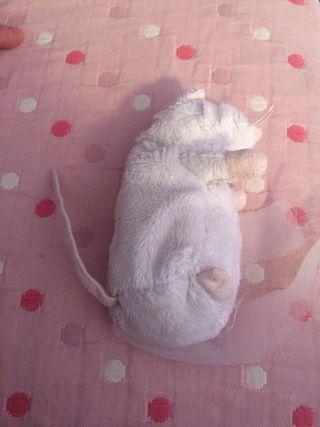 Ratón blanco peluche