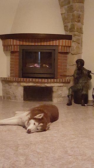 Calefaccion cheminea de gas