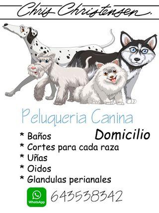 Peluquería Canina Domicilio