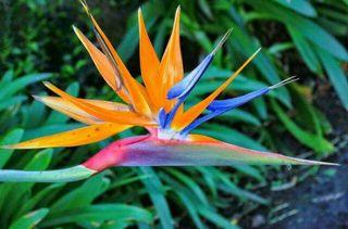 Planta tropical flor (Más plantas en mi perfil