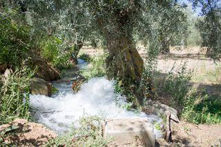 Parcela de regadío de almendros y olivos
