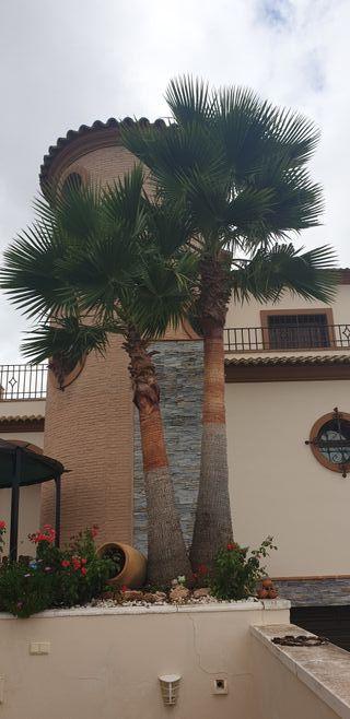 vendo palmeras