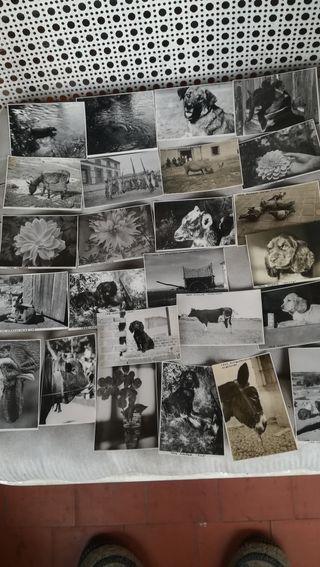 25 fotos de la década de 1940