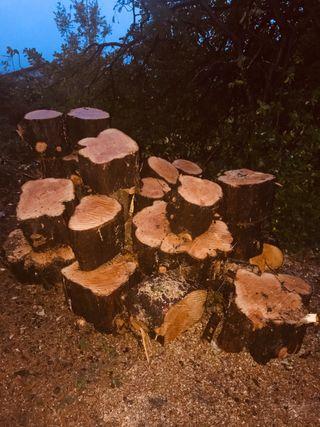 Venta de madera de pino,entre Llanes y Ribadesella