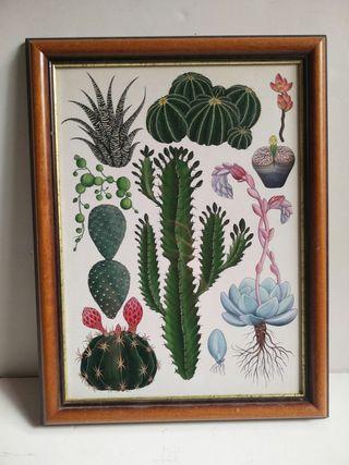 Cuadro póster Cactus